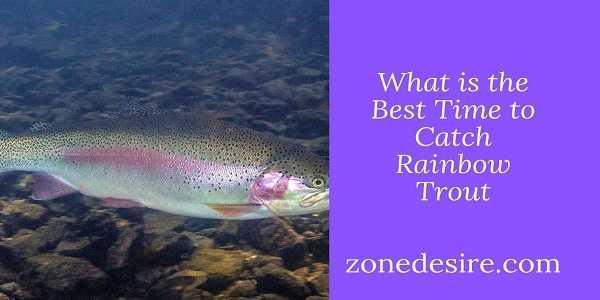 Catch Rainbow Trout